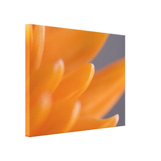 Orange Daisy Petals Stretched Canvas Prints