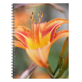 Orange day lily notebook