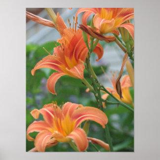 Orange Daylilies Poster