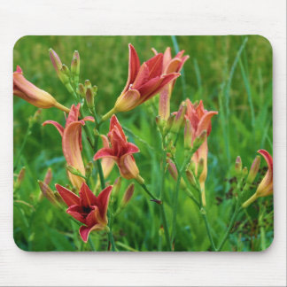 Orange Daylilies Summer 2016 Mouse Pad