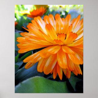 Orange Flower Blossom Poster