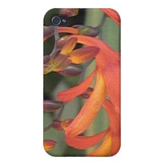 Orange Flower iPhone 4 Covers