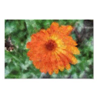 Orange flower painting art photo