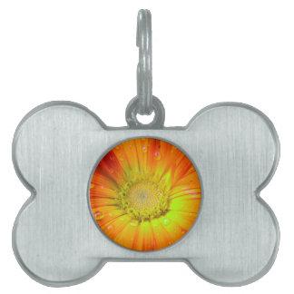 Orange flower with rain drops pet tag