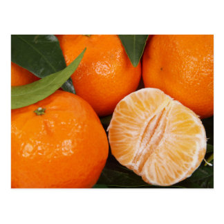 Orange fruit postcard