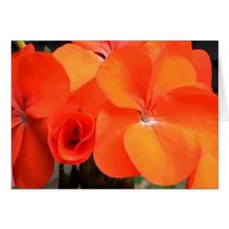 Orange Geranium Flower Photo Card