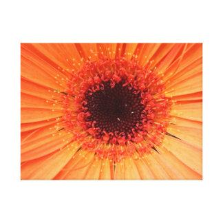 orange gerber daisy stretched canvas prints