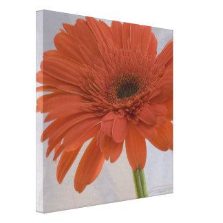 Orange Gerber Daisy Flower Canvas Print