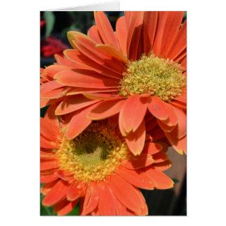 Orange Gerbera Daisies Card