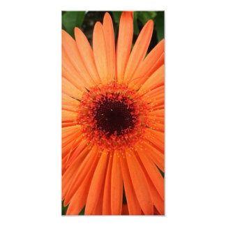 orange gerbera daisy (2 of 3) photo print