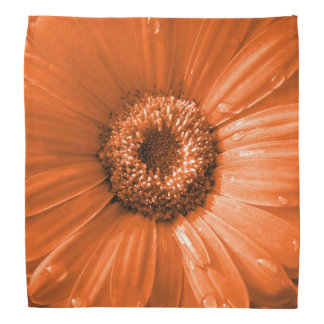 Orange Gerbera Daisy Bandana