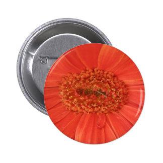 Orange Gerbera Daisy Button
