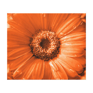 Orange Gerbera Daisy Gallery Wrapped Canvas