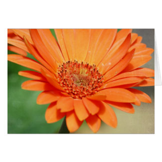 Orange Gerbera Daisy Card