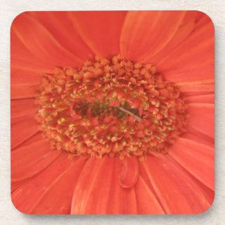 Orange Gerbera Daisy Cork Coaster