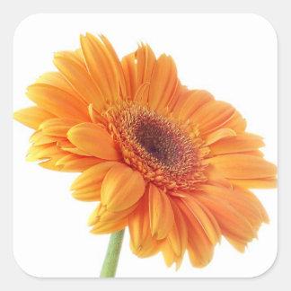 Orange Gerbera Daisy Floral Sticker