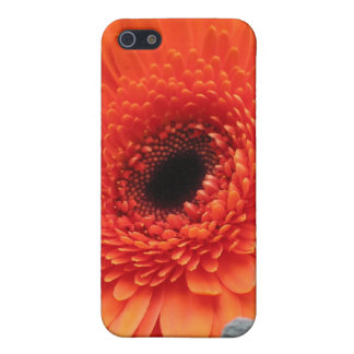 Orange Gerbera Daisy iPhone 5/5S Case