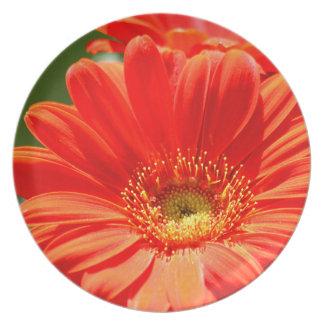Orange Gerbera Daisy Melamine Plates