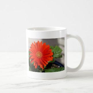 Orange Gerbera Daisy Mugs
