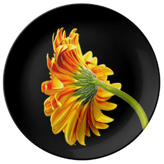 Orange Gerbera Daisy on Black Porcelain Plate