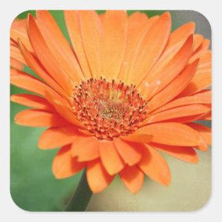 Orange Gerbera Daisy Square Sticker