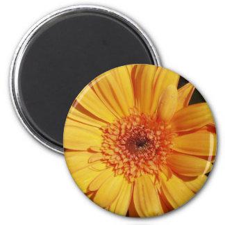 Orange Gerbera Flower Magnet