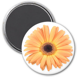 Orange Gerbera Magnet