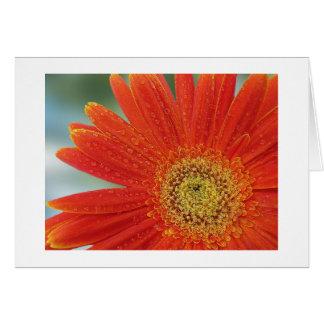 Orange Gerbera Note Card