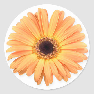 Orange Gerbera Stickers