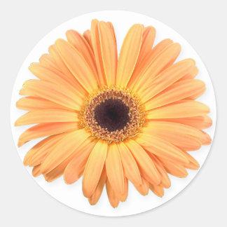 Orange Gerbera Stickers