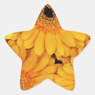 Orange Gerberas Star Sticker