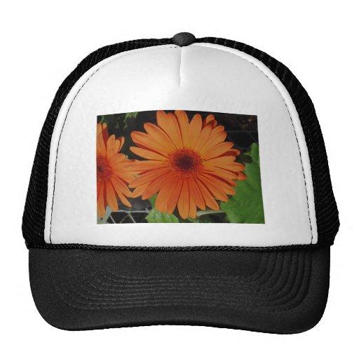 Orange Gerbers Hat