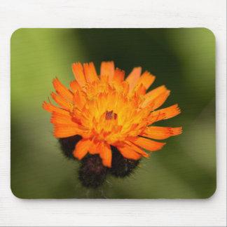 Orange Hawkweed Mouse Pad