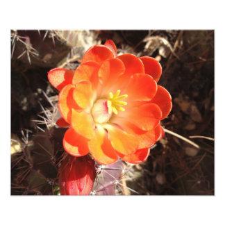 Orange Hedgehog Cactus Flower photo print