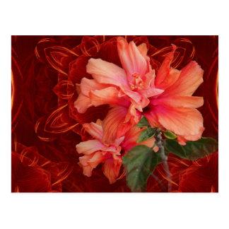 Orange hibiscus and kaleidoscope postcard