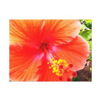 Orange Hibiscus Canvas Print
