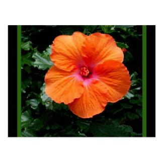 Orange Hibiscus Flower by Sharles Postcard