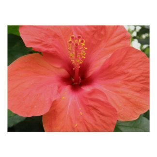 Orange Hibiscus Flower Macro Print