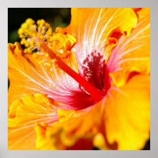 Orange Hibiscus Flower Side View Poster