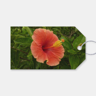 Orange Hibiscus Flower Tropical Floral Gift Tags