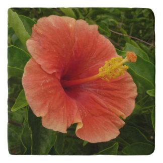 Orange Hibiscus Flower Tropical Floral Trivet