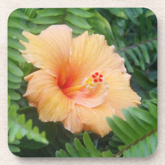 Orange Hibiscus Flower with Ferns Coaster