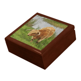 Orange Highland Cow in Scotland Gift Box