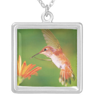 Orange Hummingbird Silver Pendant