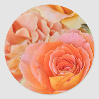 Orange hybrid tea rose classic round sticker