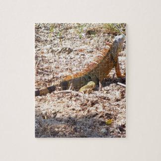 Orange Iguana hunts Jigsaw Puzzle