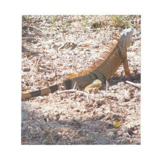 Orange Iguana hunts Notepad