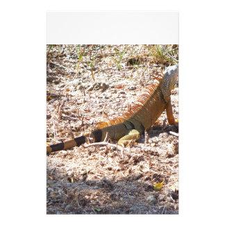 Orange Iguana hunts Stationery