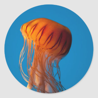Orange Jellyfish Classic Round Sticker
