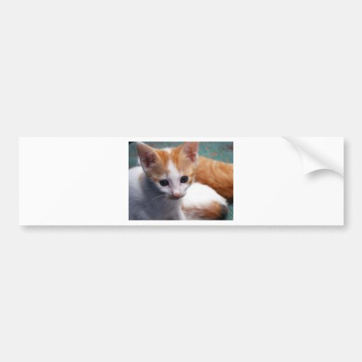 Orange Kitten Photograph Bumper Stickers